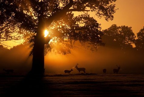 Let this beautiful light dazzle you by its soft kindness and hold you so tender in its arms forever,my dears...LOVE !