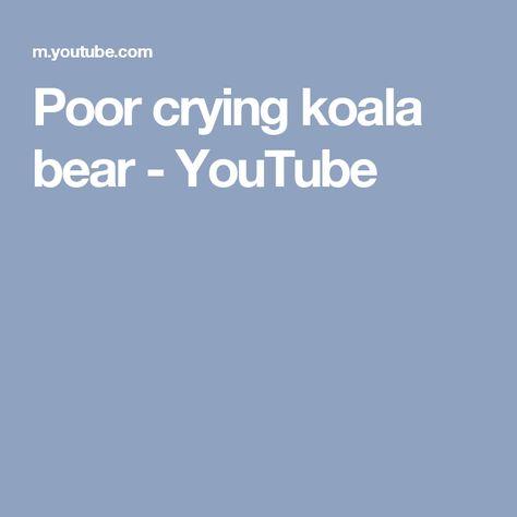 Poor crying koala bear - YouTube