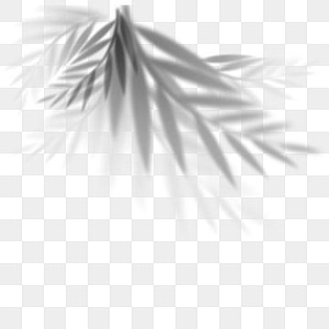 Ins Wind Leaf Shadow Shadow Projection Ins Wind Png Transparent Clipart Image And Psd File For Free Download Shadow Plants Geometric Background Clip Art