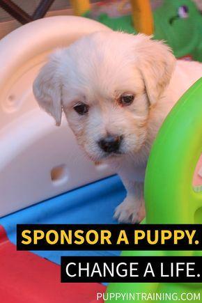 Sponsor A Puppy Change A Life At Puppyintraining Com We Raise