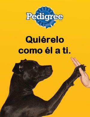 Enfermedades De Perros Hernia Discal Lesiones En La Espalda Y Espasmos Musculares En Perros Perros Hernia Discal Mejor Amigo Del Hombre