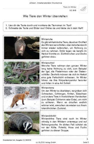 Tiere Im Winter 3 4 Klasse Winterschlaf Tiere Tiere Wald Grundschule