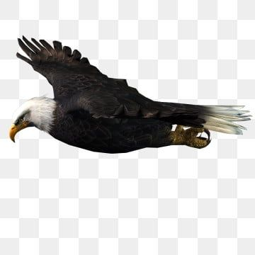 Glide Wild Eagle Eagle Aero Wild Png Transparent Clipart Image And Psd File For Free Download In 2021 Wild Eagle Beautiful Wolves Animal Clipart