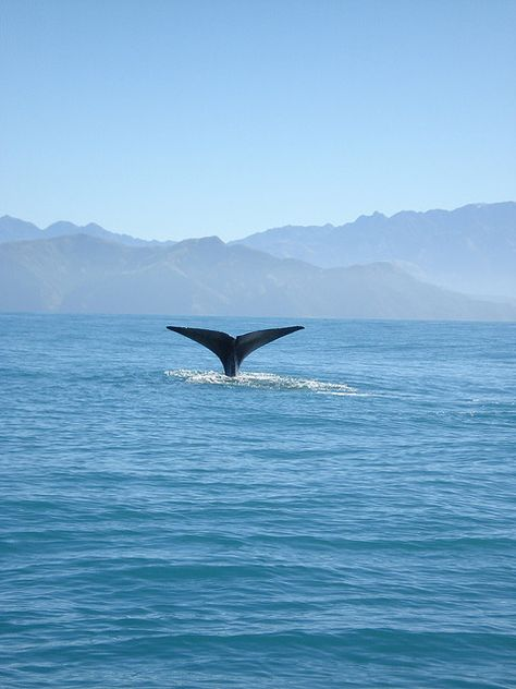 547e99a3c8be Tiaki the Whale | New Zealand | Whale, New Zealand, Whale tail