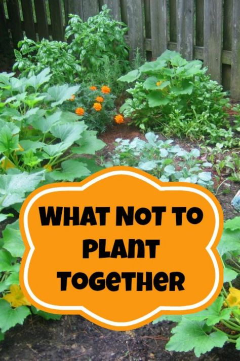 Companion Planting - What Not to Plant