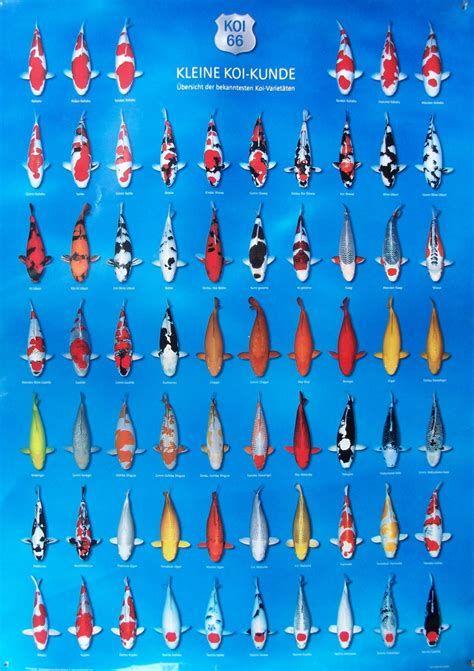 Bilderesultat For Koi Fish Color Chart Poisson Koi Koi Poisson Rouge
