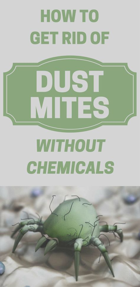 How To Get Rid Of Dust Mites Without Chemicals Dust Mites Dust