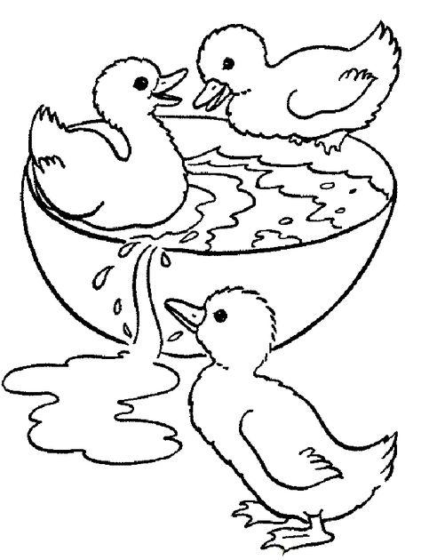 ördek Boyama Sayfası Umranww