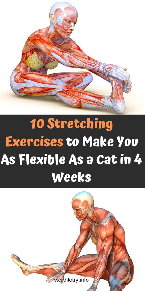 10 Stretching Exercises to Make You As Flexible As a Cat in 4 Weeks ! | The Secret Is Here