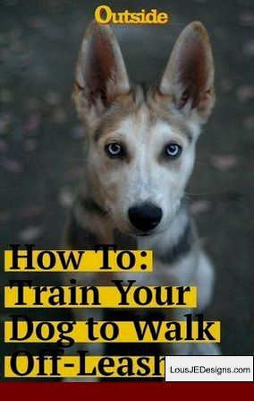 How To Train Your Dog To Go The Bathroom In One Spot And Pics Of Tips For Training Timid Dogs Tip 2677792 Training Your Dog Dog Training