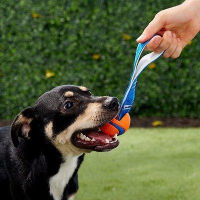 Chuckit Ultra Tug Ball Dog Toy Medium Chewy Com Dog Toys