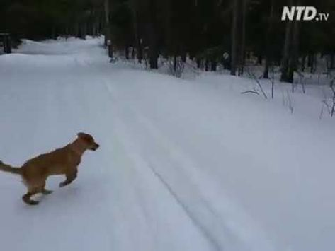 Dogs in the snow, so cute
