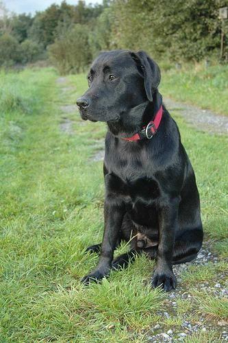 Labrador Energy Review You Need A Labradorpuppiesyellow