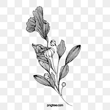 Flower Line Png Images Vector And Psd Files Free Download On Pngtree Flower Line Drawings Plant Drawing Flower Drawing