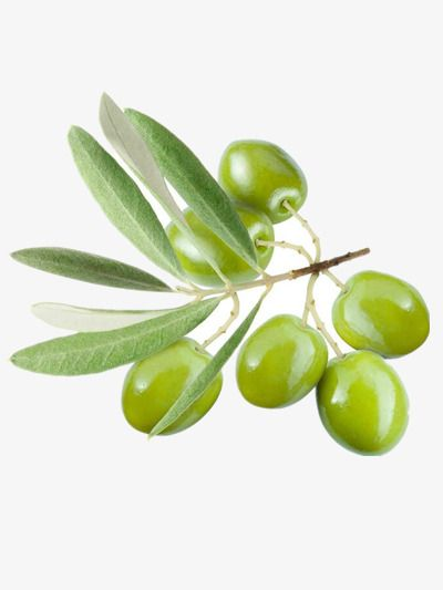 Olive Tree Branch Olive Clipart Olives Olive Branch Png Transparent Clipart Image And Psd File For Free Download Azeitona Azeite Oliveira