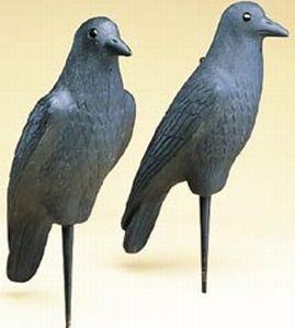 leurre pour la Chasse Jardin floque en plastique dur noir de jais leurre en forme de Corbeau pour la Chasse R TOOGOO
