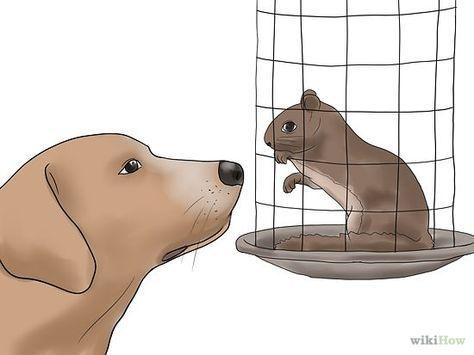 Train A Squirrel Dog Aggressive Dog Dog Training Training Your Dog