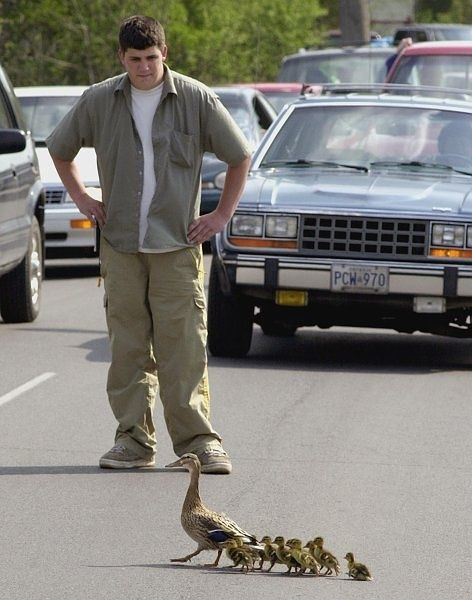 Duck family crossing the road with humans protecting them.