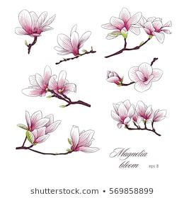 Magnolia Blooms Colorful Set Magnolia Tattoo Japanese Flower Tattoo Flower Wrist Tattoos