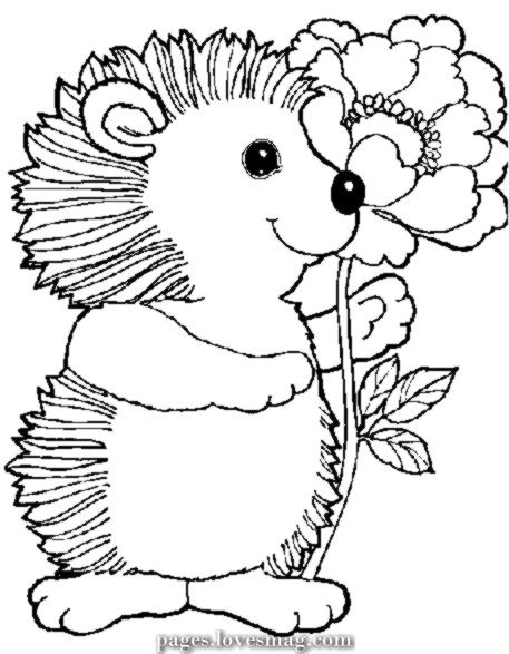 Spectacular Coloring Web Page Hedgehog Animals Printable Coloring Pages Hedgehog Colors Flower Coloring Pages Animal Line Drawings