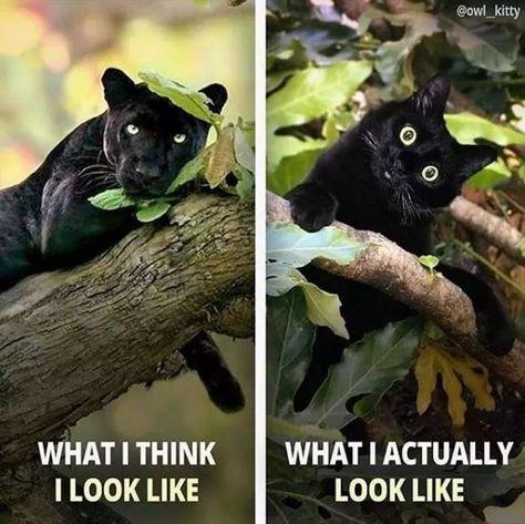 Afternoon Delight: Black Cat Magic (18 Memes And Vids) - I Can Has Cheezburger?