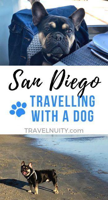 Dog Friendly San Diego Visiting San Diego With A Dog Travelnuity Travel San Diego Ideas Of Travel In 2020 Visit San Diego Dog Friendly Hotels Dog Friendly Beach