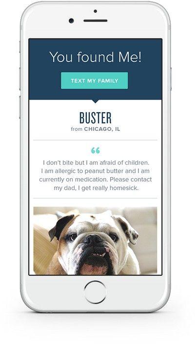 Let S Talk Pet Health Insurance Pet Insurance Reviews Pet Health Insurance Embrace Pet Insurance