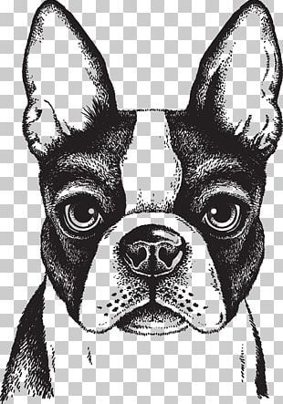 Puppy Png Images Puppy Clipart Free Download Boston Terrier Illustration Monkey Illustration Boston Terrier