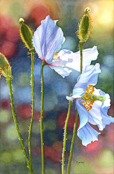 Paintings Marney Ward Sfca Sca Artist Floral Watercolor