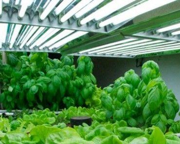 7 Out Of The Ordinary Shade Perennials Farming Gardening