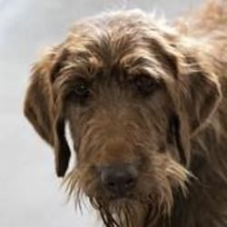 Pin On Adoptable Pets Colorado