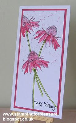 Stamping For Pleasure: Beautiful Cone Flowers