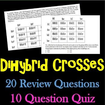Dihybrid Cross Practice Problems Dihybrid Cross Teaching Science Independent Practice