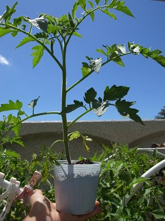 家庭菜園 おしゃれまとめの人気アイデア Pinterest Ka 家庭菜園