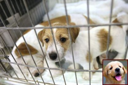 1 Have Dog Behavior Problems Learn About Dog Behavior Backing