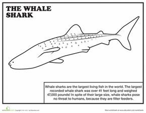 Whale Shark Coloring Page In 2020 Shark Coloring Pages Whale Shark Shark Activities