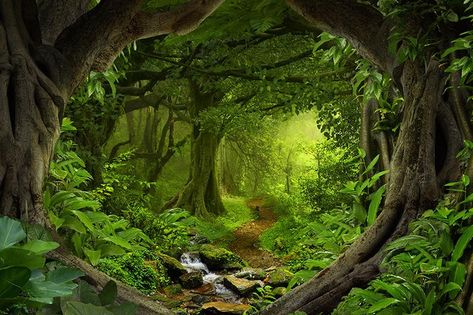 Fantasy Enchanted Magical Forest - Large Wall Mural, Self-adhesive Vinyl Wallpaper, Peel & Stick fabric wall decal