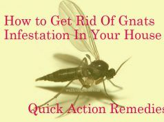 25 Quick Action Home Remedies To Get Rid Of Gnats Infestation In Your House How To Get Rid Of Gnats Gnats Vicks Vaporub