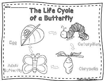 Butterfly Life Cycle Diagram And Worksheets Butterfly Life Cycle
