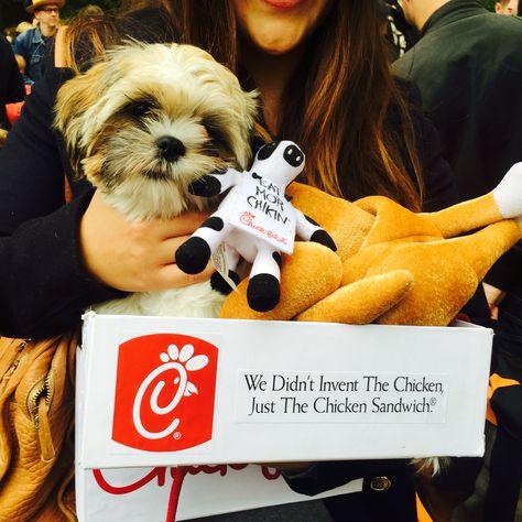 Best dog Halloween costume ever!!! #chickfila #chickennugget