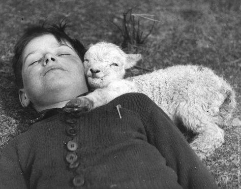 Cordero durmiendo con niño