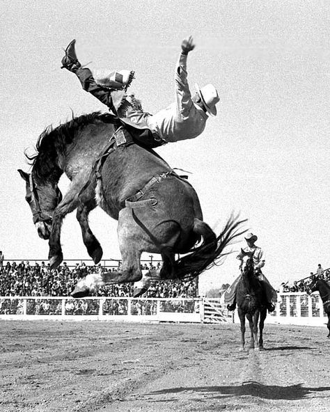 Approximately photos (mostly B&W) available from pro rodeos Also a few thousand photos of flora, fauna and scenics available. Contact me for details (email or All photos copyright Fred Kobsted. Rodeo Cowboys, Real Cowboys, Cowboy Photography, Animal Photography, Cowboy Art, Cowboy And Cowgirl, Rodeo Time, Bull Riding, Le Far West