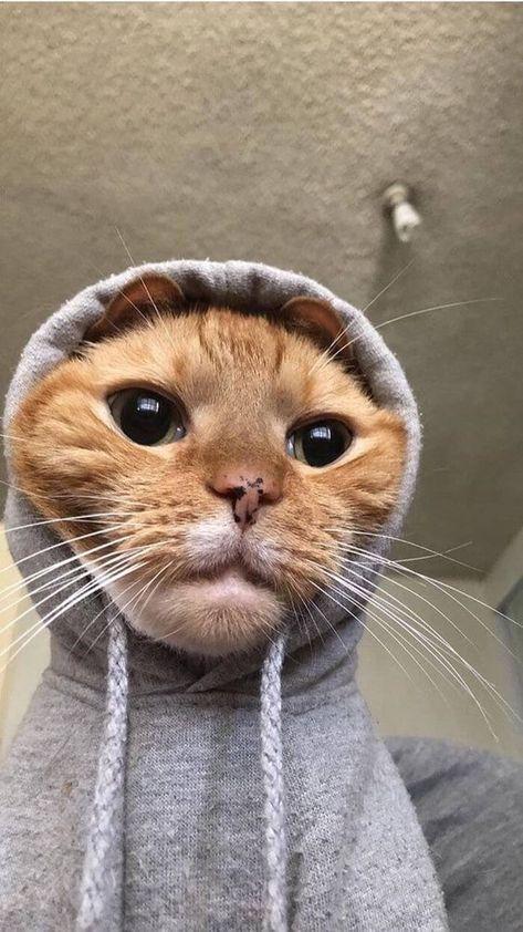 Amazon.com: cat