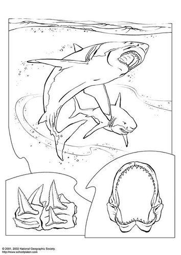 malvorlage haifisch  malvorlagen tiere kostenlose