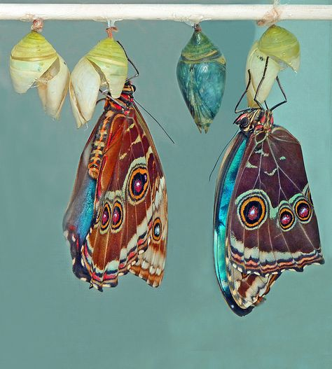 """Butterflies and Cocoons ~ """"just                 when the   caterpillar  thought the  world was   over, it  became a   butterfly . . . """"                      -proverb"""