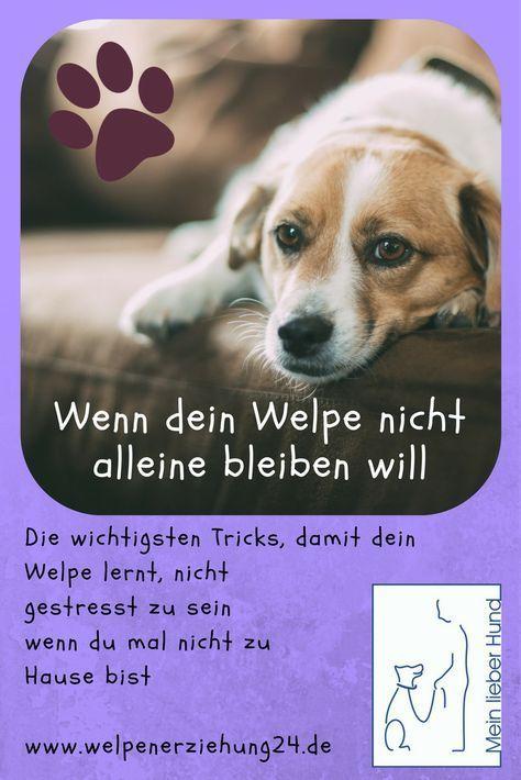 Probleme Beim Alleinbleiben Welpenerziehung Sorge Dafur Dass Dein Welpe Lernt Entspannt Alleine Zu Bleiben Das Schont Nich In 2020 Welpen Welpenerziehung Hunde