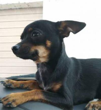 Lost Dog Amarillo Texas Tx United States L42798 Losing A