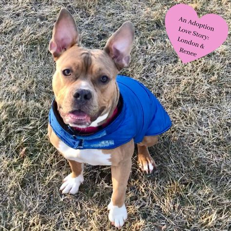 Introducing Our Adoption Love Story Of London And Her Mom Renee My Dog Jake Passed Away Late May Of 2018 My Heart Was Sha Pets Pet Adoption Adoption Stories