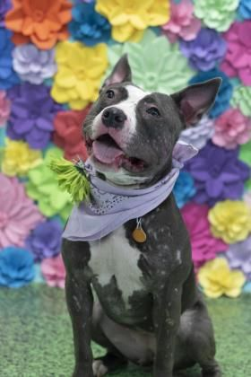 Ramona Located In Philadelphia Pa Has 1 Day Left To Live Adopt