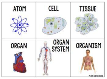 Levels Of Organization Card Sort Activity Sorting Cards Levels Of Organization Biology Sorting Activities